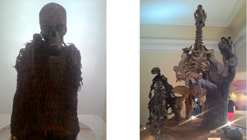 Imagens do Museu de História Natural da UFRJ- Múmias, animais pré-históricos e a história da humanidade